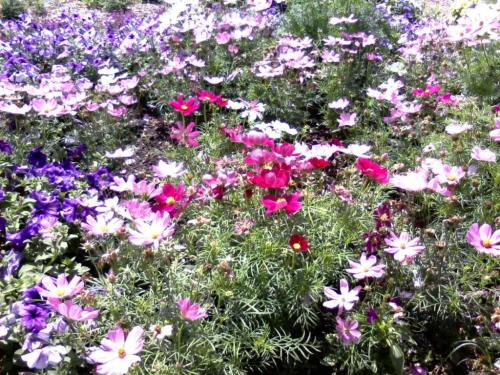 flowers gib